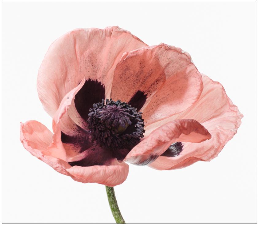 Big Blooms: PALOMA, 2014